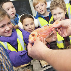 Fish Market Tours / Education